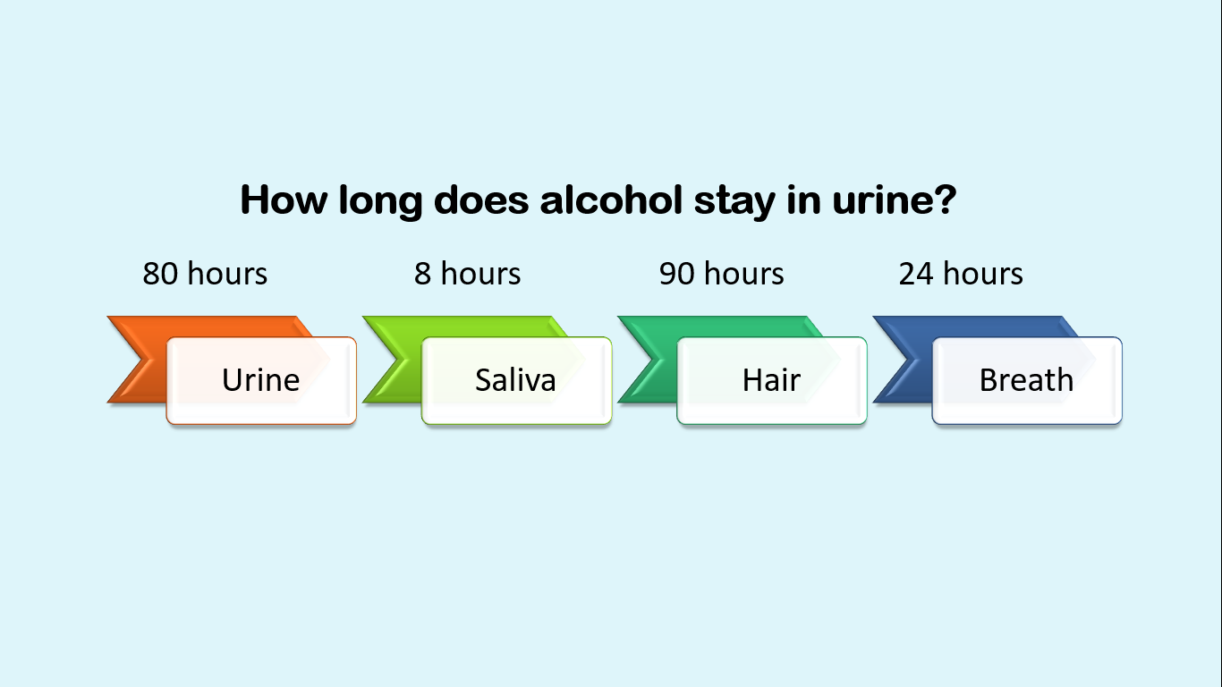 How long does alcohol stay in urine